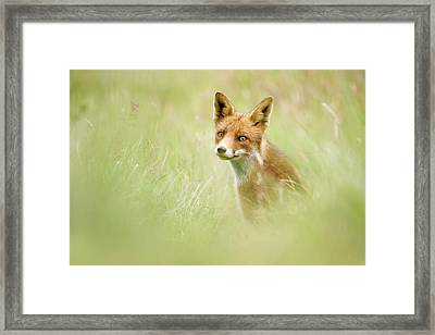 Sea Of Green - Red Fox In The Grass Framed Print by Roeselien Raimond