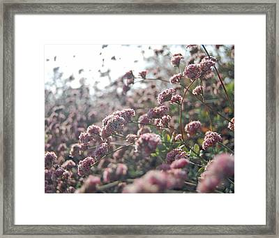 Sea Of Pink Framed Print by Jean Booth