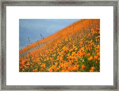 Sea Of Poppies Framed Print by Kyle Hanson