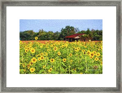 Sea Of Sunflowers Framed Print by Bonnie Barry
