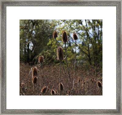 Sea Of Thistles Framed Print by Erica Hanel