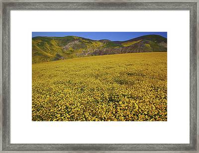 Framed Print featuring the photograph Sea Of Yellow Up In The Temblor Range At Carrizo Plain National Monument by Jetson Nguyen
