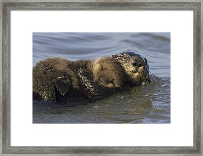 Sea Otter Mother With Pup Monterey Bay Framed Print by Suzi Eszterhas