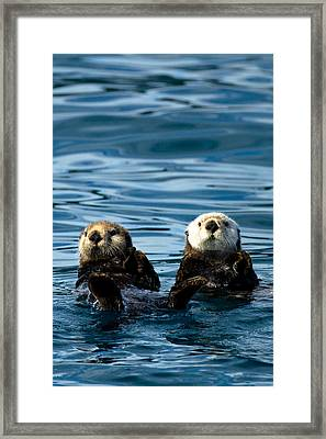 Sea Otter Pair Framed Print by Adam Pender