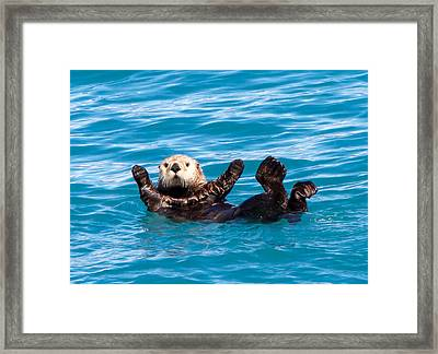 Framed Print featuring the photograph Sea Otter by Phil Stone