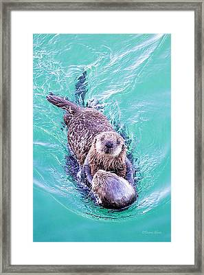 Sea Otter Pup Framed Print