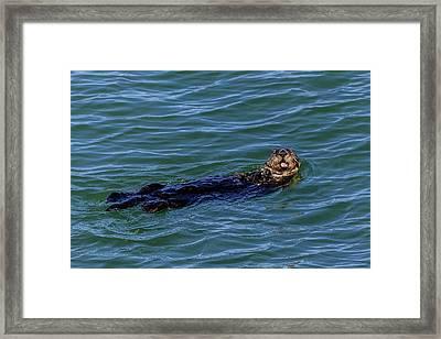 Sea Otter Framed Print