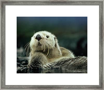 Sea Otter  Framed Print by Tim Fitzharris