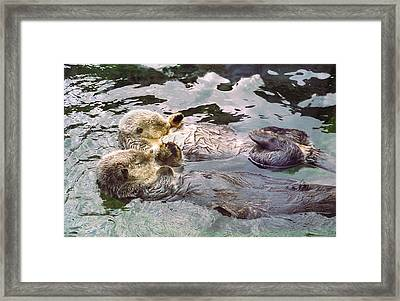 Sea Otters Holding Hands Framed Print by BuffaloWorks Photography