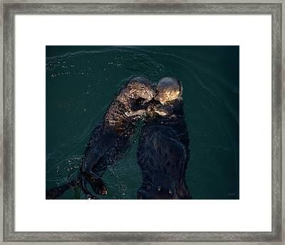 Sea Otters II Color Framed Print