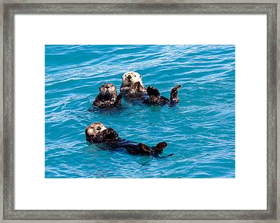 Sea Otters Framed Print by Phil Stone