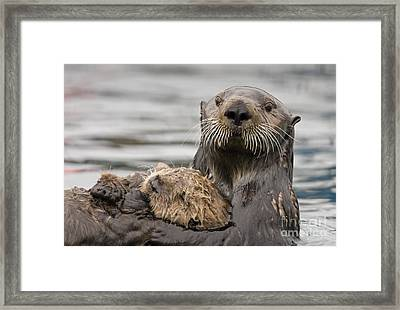 Sea Otters Framed Print by Tim Grams