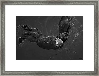 Framed Print featuring the photograph Sea Otters V Bw by David Gordon