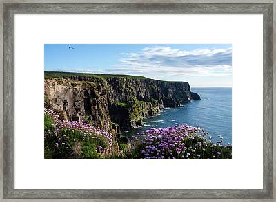 Sea Pink On The Cliffs Framed Print by Aidan Moran