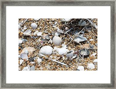 Sea Ribbons And Shells Framed Print by Marcie Daniels