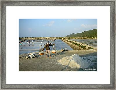 Sea Salt Harvesting In Vietnam  Framed Print