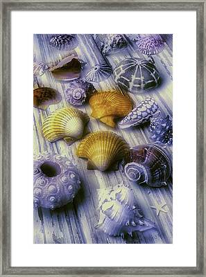 Sea Shell Arrangement  Framed Print by Garry Gay
