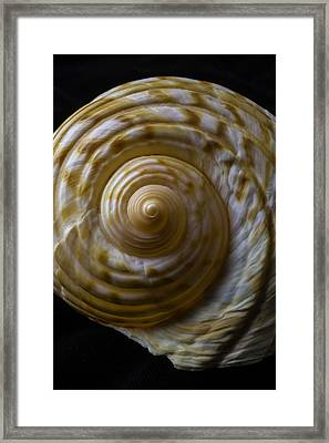 Sea Shell Beauty Framed Print by Garry Gay