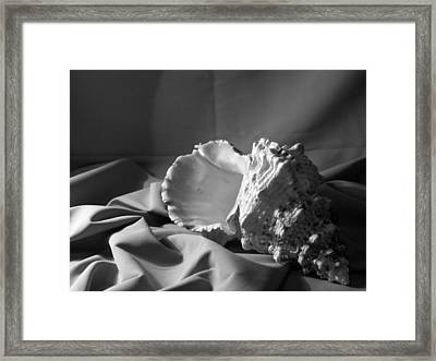 Sea Shell From The Beach 2 Framed Print by Keri Renee