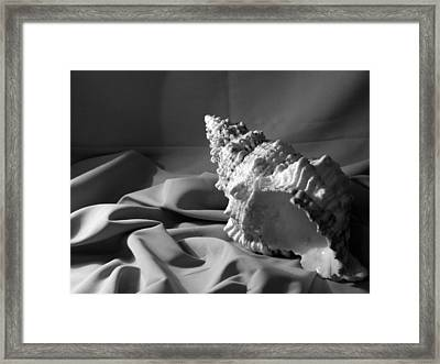 Sea Shell From The Beach Framed Print by Keri Renee