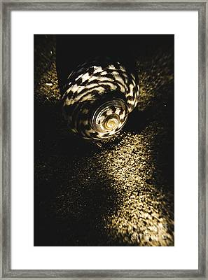 Sea Shell In Darkness Framed Print