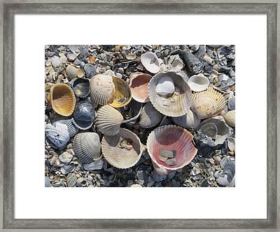 Sea Shell Mozaic Framed Print