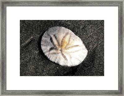 Framed Print featuring the photograph Sea Shell by Norman Hall