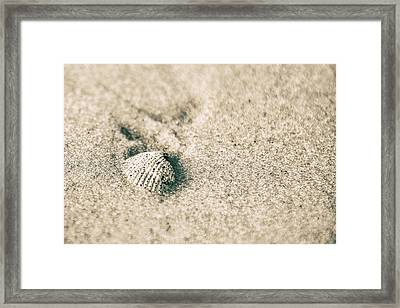 Framed Print featuring the photograph Sea Shell On Beach  by John McGraw