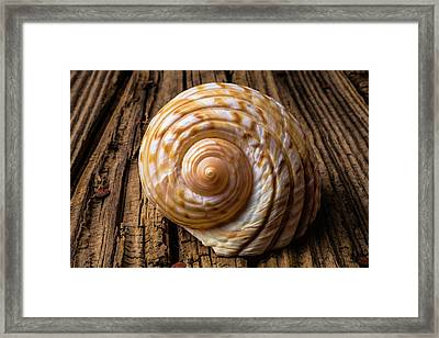Sea Shell Study In Brown Tones Framed Print by Garry Gay