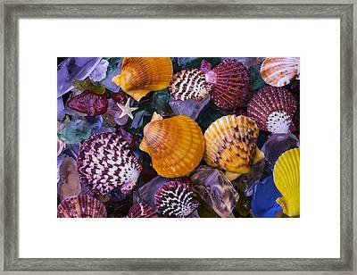 Sea Shells And Sea Glass Framed Print