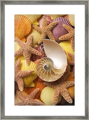 Sea Shells And Starfish Framed Print by Garry Gay