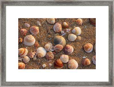 Sea Shells At Sunset Framed Print