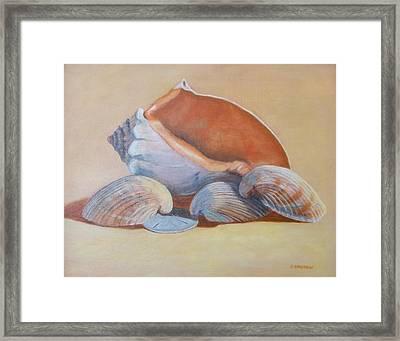 Sea Shells Framed Print by Betty Henderson