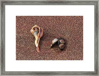 Sea Shells Framed Print