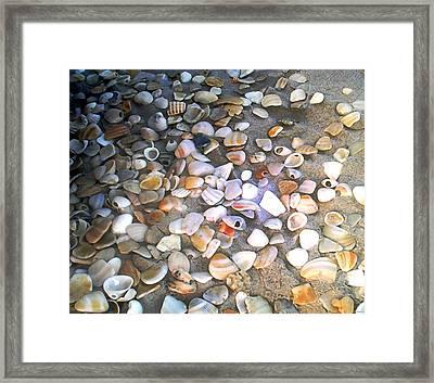 Sea Shells Framed Print by Evelyn Patrick