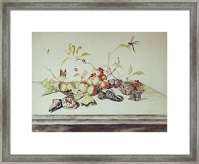 Sea Shells Framed Print by Joseph Valencia