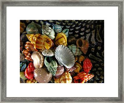 Framed Print featuring the photograph Sea Shells by Lori Miller