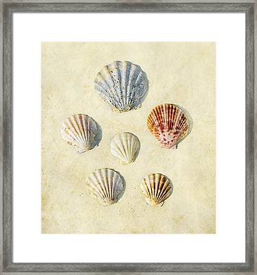 Sea Shells Framed Print by Paul Grand