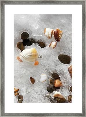 Sea Shells Rocks And Ice Framed Print by Matt Suess
