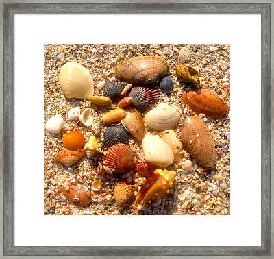 Sea Shells Work D Framed Print by David Lee Thompson