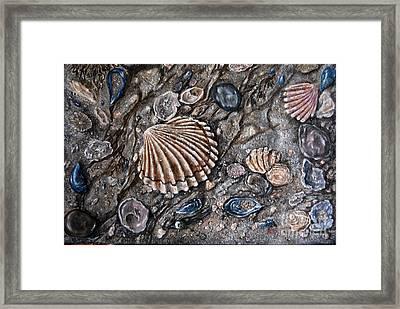 Sea Shore Framed Print by Avril Brand