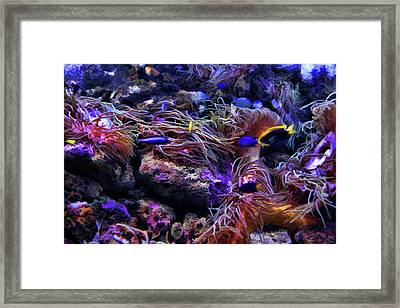 Sea Spaghetti  Framed Print