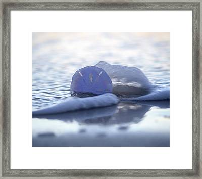 Sea Splash Framed Print by Betsy Knapp
