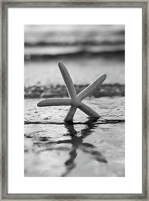 Framed Print featuring the photograph Sea Star Bw Vert by Laura Fasulo