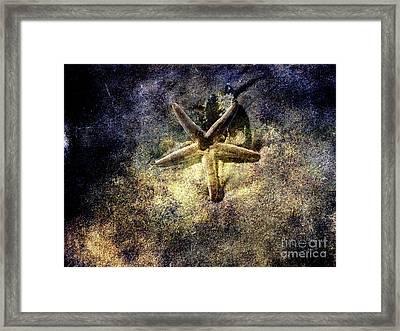 Sea Star Framed Print by Susanne Van Hulst