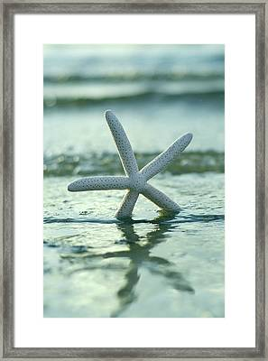 Framed Print featuring the photograph Sea Star Vert by Laura Fasulo