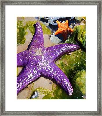 Sea Stars Framed Print