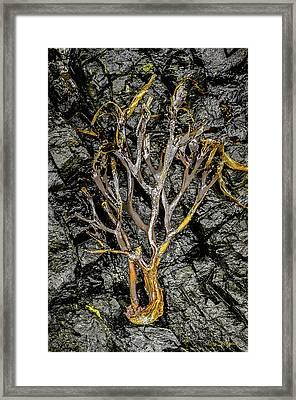 Sea To Tree Framed Print