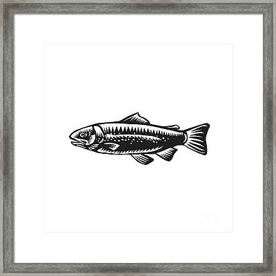 Sea Trout Spotted Framed Print by Aloysius Patrimonio