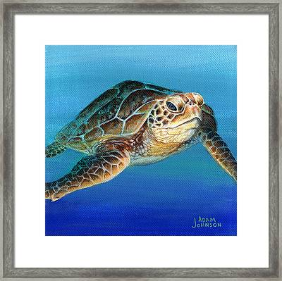 Sea Turtle 1 Of 3 Framed Print
